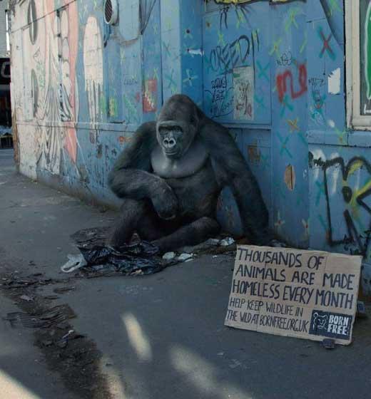 lap ub du jour animaux en ville