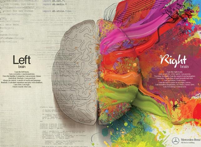 les deux cerveaux