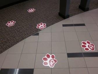 iq floor paws 337 x 253