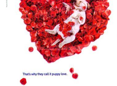 Les plus belles publicités sur la Saint Valentin... de quoi devenir Romantique - creative valentine's day ads 57